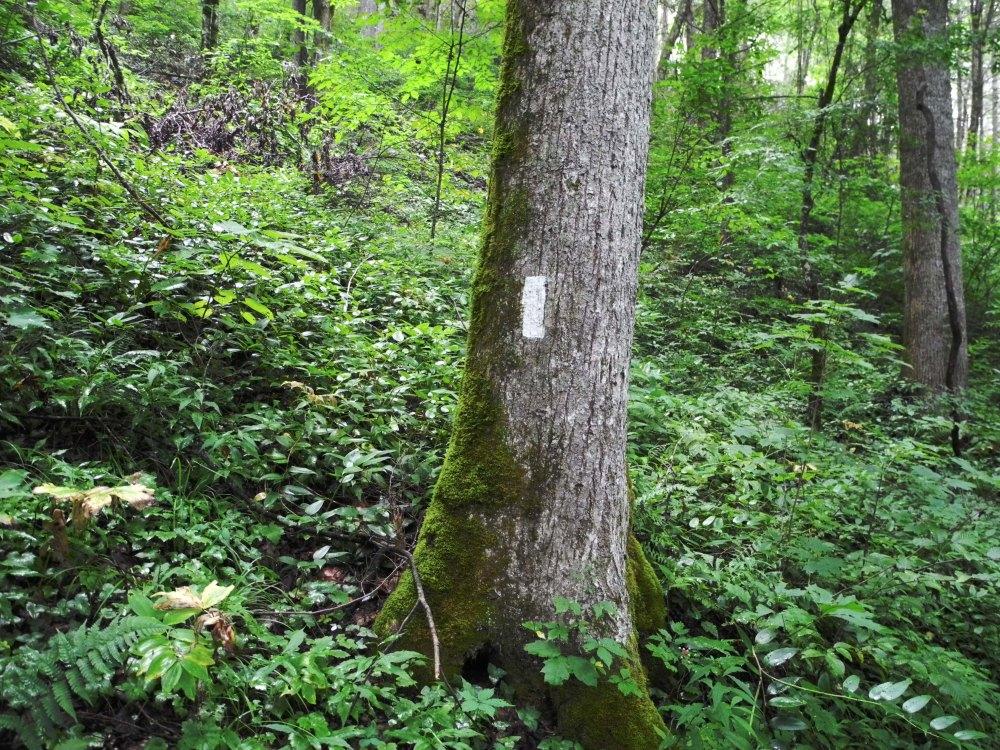 Appalachian Trail (4)